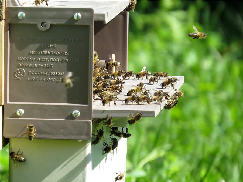Курский пыльцеуловитель