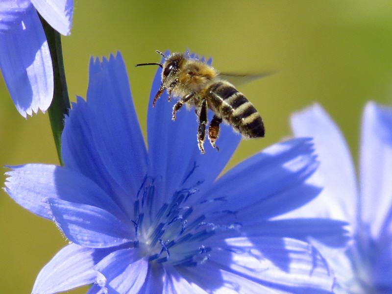 Пчела полетела дальше