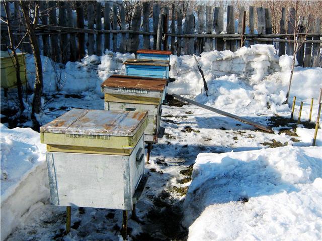 Выставка пчёл из зимовника
