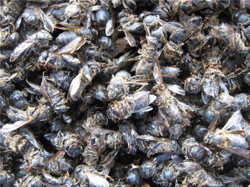 Сушеный подмор пчел