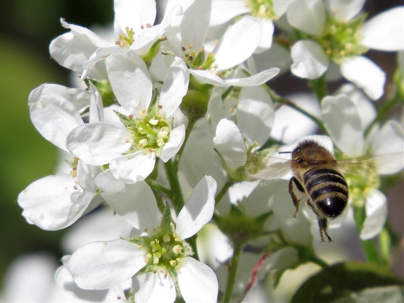 Полёт пчелы за секунду по посадки