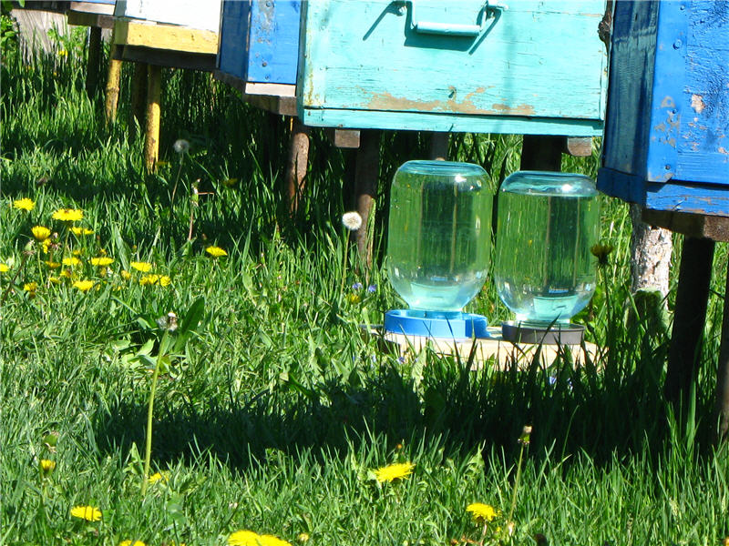 Пасечные поилки для пчёл