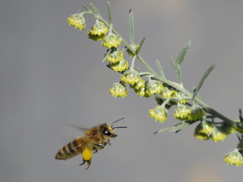Взять или не взять пыльцу?