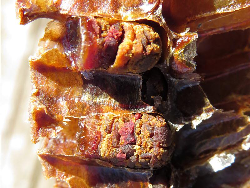 Пчелиная перга в сотах