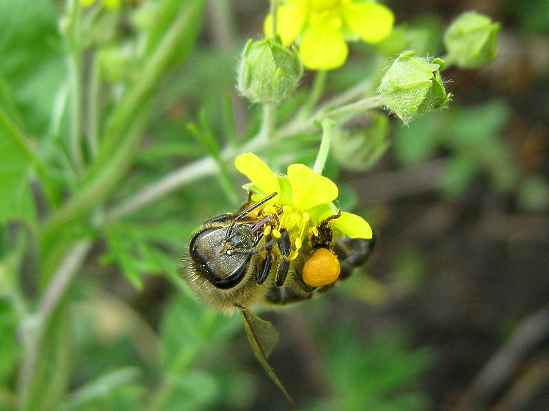 Цветок меньше пчелы