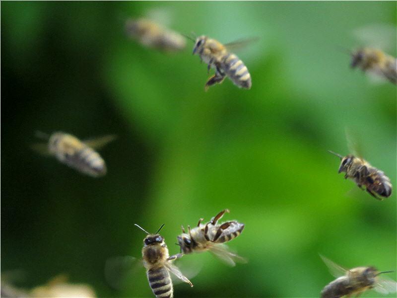 Пчела отдыхает, устала наверное