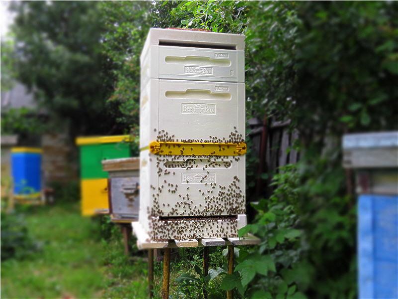 Финский улей Bee-Box: опыт эксплуатации
