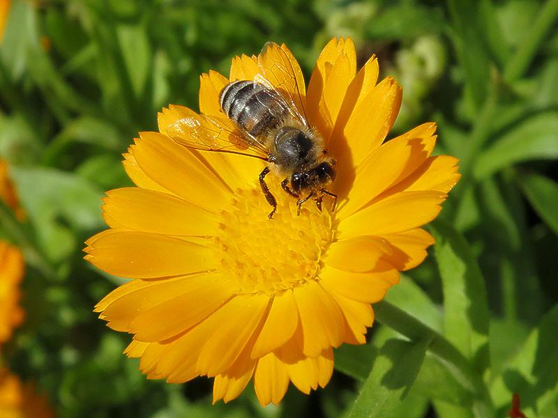 И нектар, и пыльца?