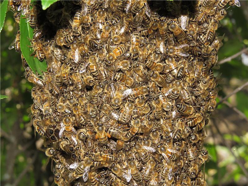 Мёд диких пчёл