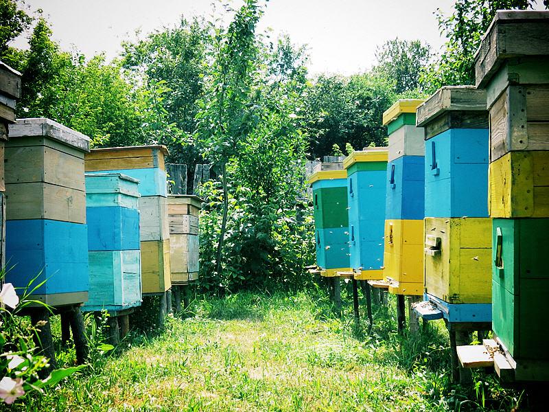 Двухкорпусное содержание пчёл в дадане