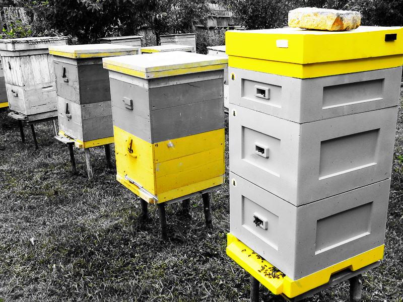Пчела видит жёлтый цвет