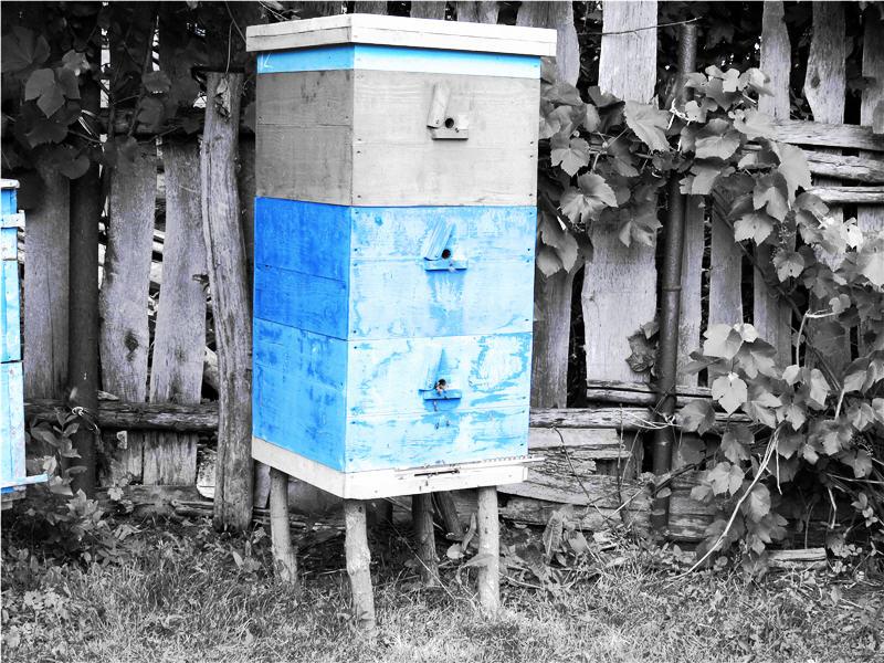 Пчела видит синий цвет