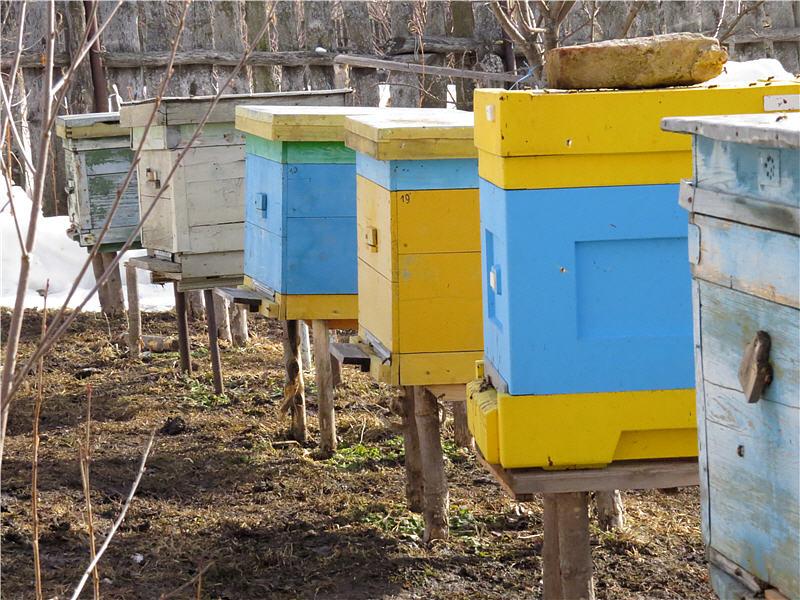 Зимовка пчёл в ульях Лысонь