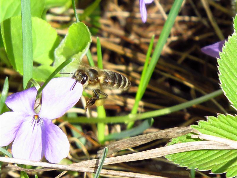 Пчелиные прятки