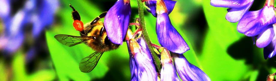 Блог Пчеловода - Онлайн дневник пасечника: фотографии, советы, мысли, наблюдения