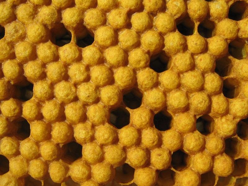 горбатый расплод у пчел фото момента открытия территории